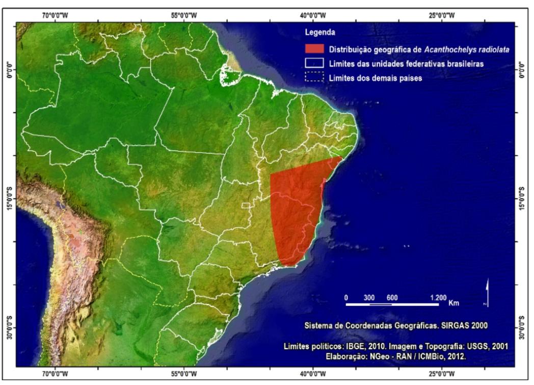 Cágado-amarelo endêmico do Brasil